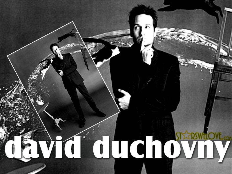 David Duchovny wallpaper (dd_wallpapers001, 800 x 600 pixels, 105 kB)